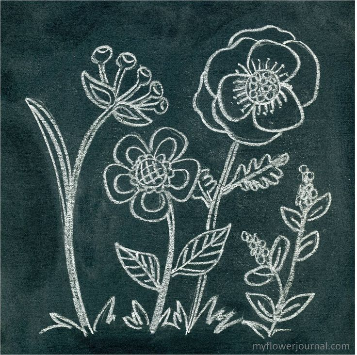 Photo tutorial shows how to create Anthropologie inspired flower chalk art. Tips and instructions on how to transfer your design to your chalkboard.