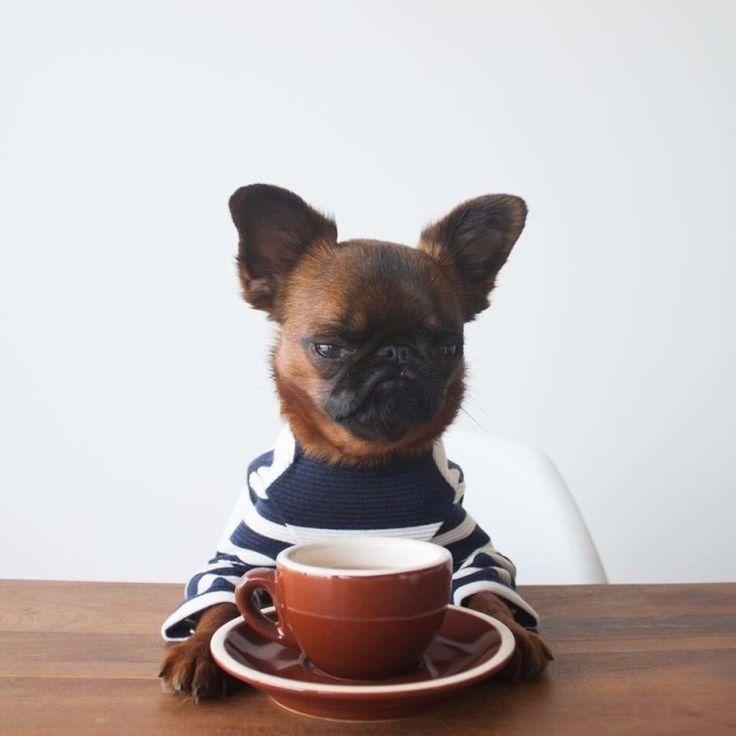 Напоминаю: утренний кофе не делает меня добрее. Он просто бодрит.
