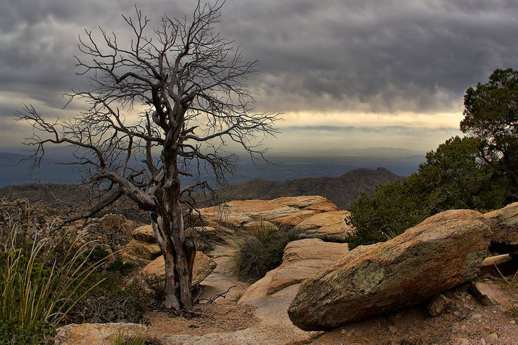 Mount Lemmon, Tucson, Arizona, USA  Mount  Lemmon by Leda Robertson
