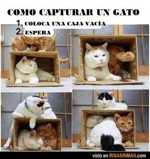 Cómo capturar a un gato. Pones una caja vacía. Esperas...