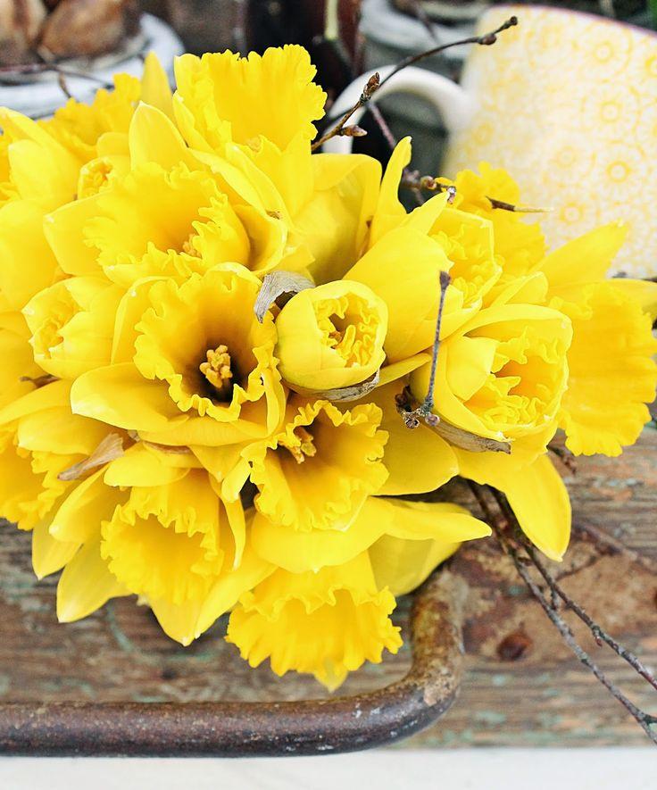 Vibeke ДИЗАЙН: весенние цветы