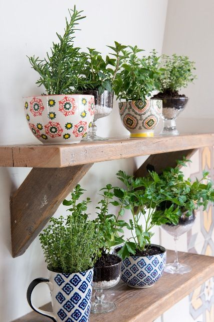 Use coffee mugs for a stylish way to grow your herbs! I have my coffee mug collection. What a great way to display them!