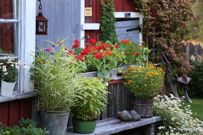 Summer Garden by Puumuli