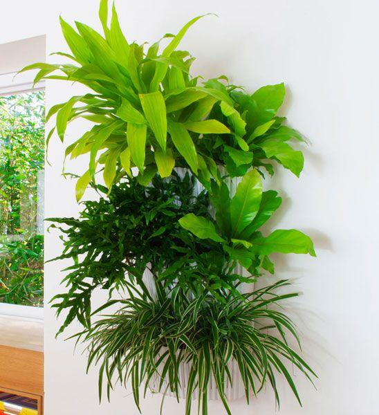 Fabulous Living Wall Planter von Woolly Pocket Ein Wandpflanzkasten aus wei em Kunststoff f r vertikale G rten Indoor u Outdoor Bei Greenbop im Online Shop kaufen