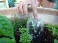 How To Make Your Own Self Watering Pot - Build.com 30 Second Tip keeping plant watered while you are on vacation.