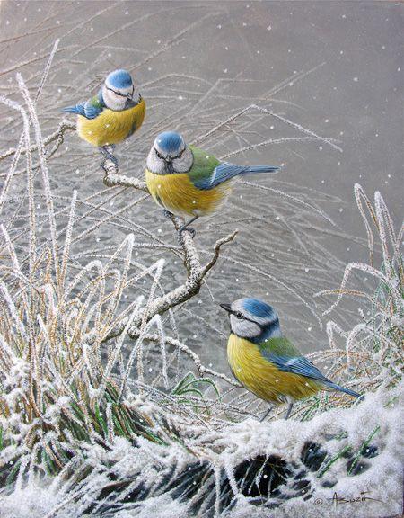 Trois mésanges bleues par André Buzin