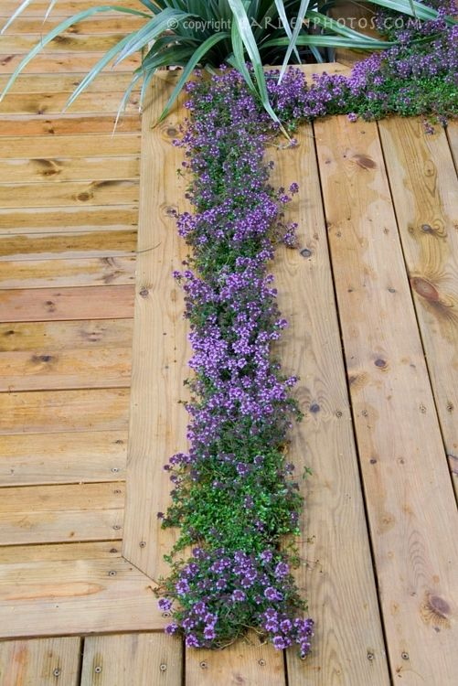 44 Best Gardening Hearty Herbs Images On Pinterest