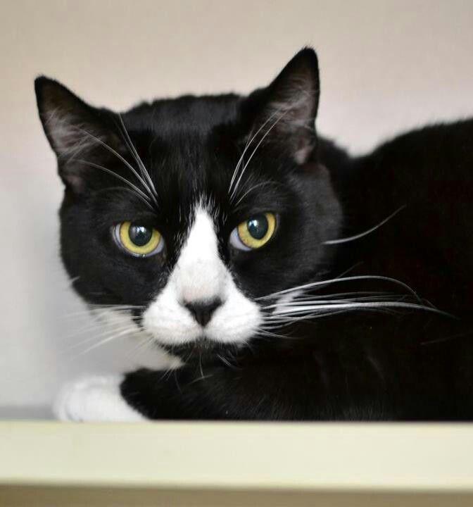 Cute black and white cat