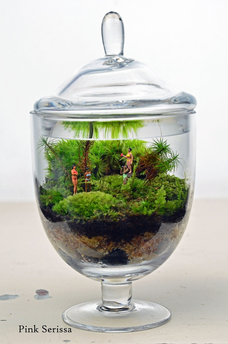 1000 images about my terrariums on pinterest deer ferns and terrarium kits. Black Bedroom Furniture Sets. Home Design Ideas