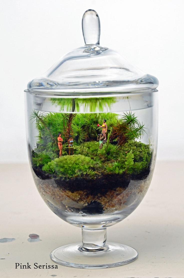 1000 images about my terrariums on pinterest deer ferns and terrarium kits. Black Bedroom Furniture Sets. Home Design Ideas