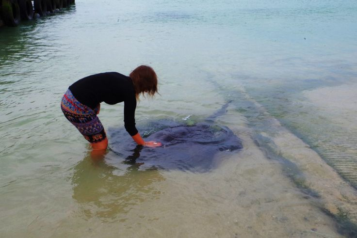 A weekend trip to Cape Agulhas & Struisbaai, South Africa and the meeting with stingrays in the habor