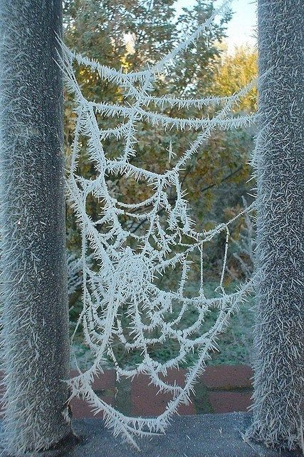 #Nature is #Art - check out this frozen spiderweb. Awesome #photography