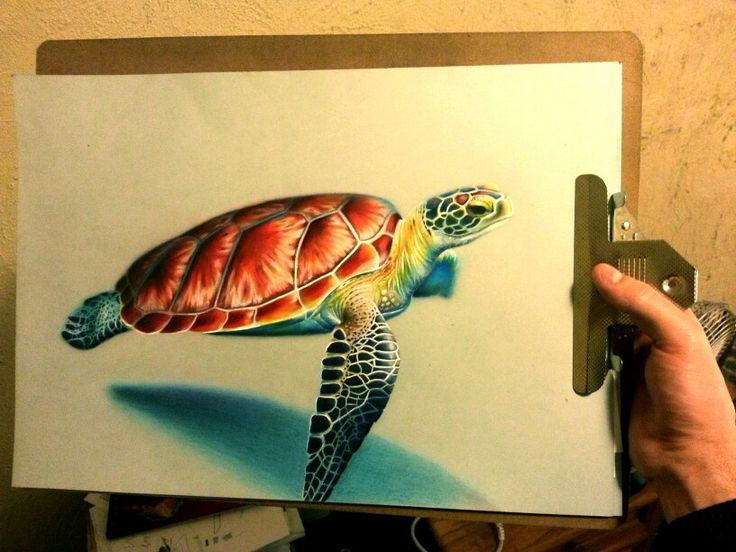 Update of my color pencil drawing of the turtle. #drawing #colorpencil #surreal #turtle #colorful #realistic