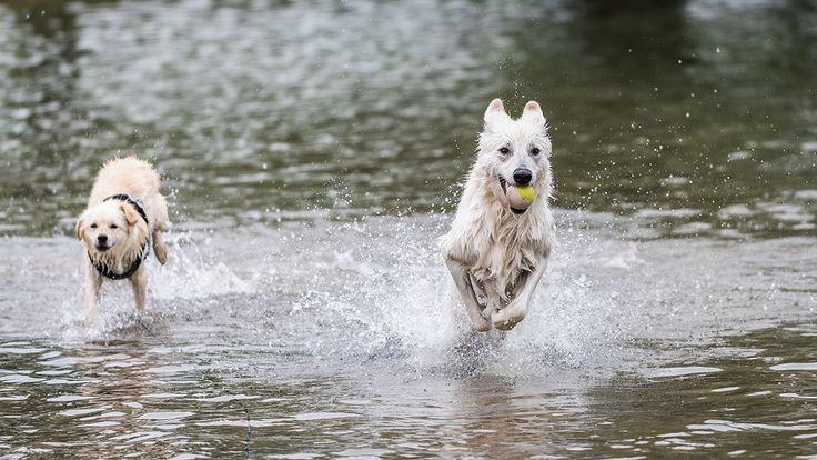 Doggieshoot