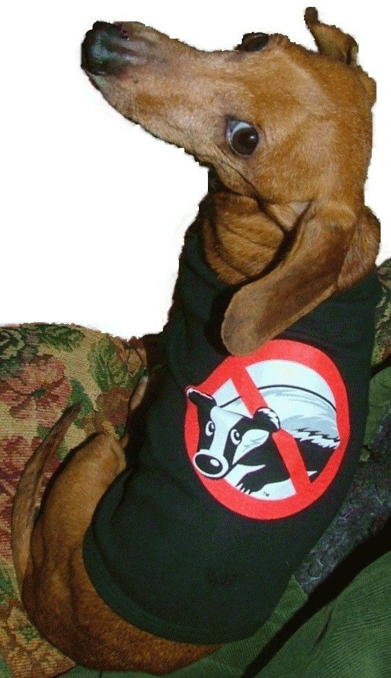 Hey, I found this really awesome Etsy listing at https://www.etsy.com/listing/49459338/dachshund-badger-buster-tank-style-t
