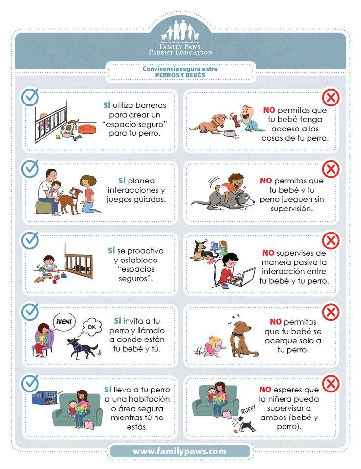 Consejos para tu perro antes y después de tu bebé