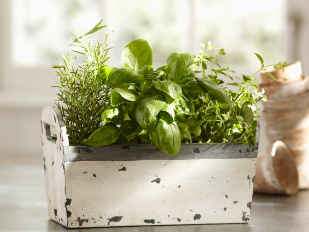 Even In The Dead Of Winter, These Indoor Herb Growing Kits Can Keep You In