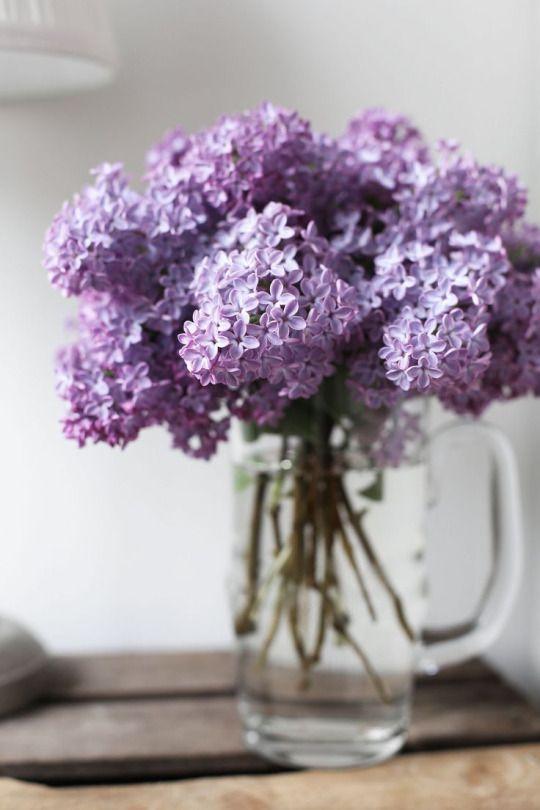 Lilac Budlea