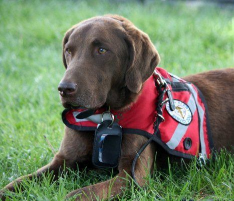 How To Get A Diabetic Alert Dog Australia