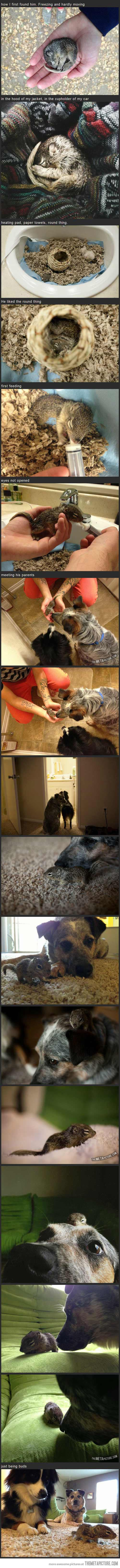 The best images about this is why i love animals more than ppl