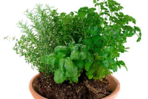 how to keep potted parsley fresh