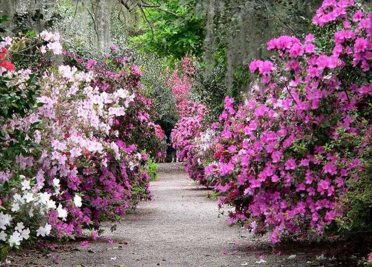 Entretien de jardin facile conseils pour les jardiniers amateurs et photos allee and tree - Allee de jardin facile ...