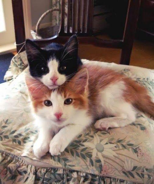 Adorable, lol Cats