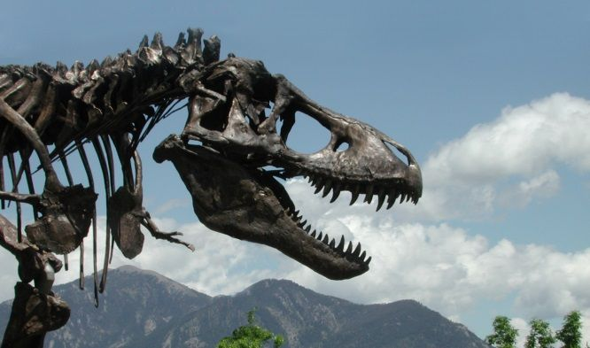 A cast of the Tyrannosaurus rex skeleton known as the Wankel T. rex was installed in front of the Museum of the Rockies at Montana State University in Bozeman, Montana in 2001. The actual fossil specimens are being loaned by the U.S. Army Corps of Engineers to the Smithsonian Institution�019s National Museum of Natural History for display in the National Museums new paleobiology hall, slated to open in 2019.
