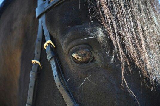 # eye # horse # Jupiter
