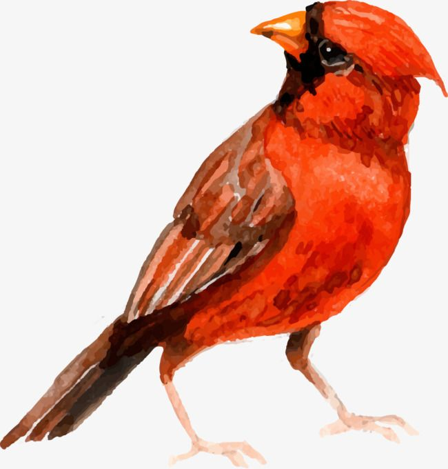 Vector Watercolor Painted Red Bird | FILE AI