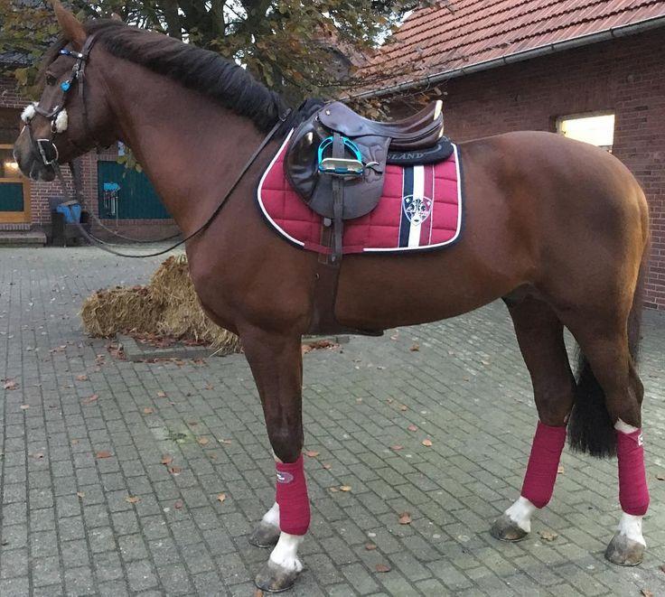 Sangria Big Square mit Bandagen ❤️ #eskadronoutfits #eskadron #eskadronsuchti #bigsquare  #horses #equestrian