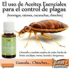 17 mejores ideas sobre repelente para chinches en - Remedios caseros para eliminar hormigas en casa ...