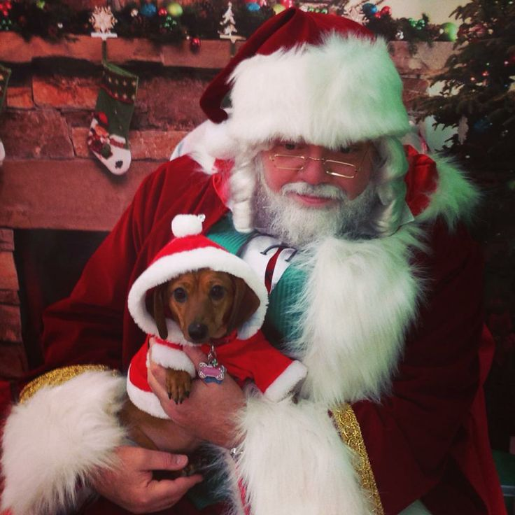 """""""Wrigley had a lot to explain to Santa last weekend, but we think she's back on the nice list now!""""  How could Santa fault a puppy with a face like this?  We're sure she made it back on the """"nice"""" list. #crazyaboutpets"""