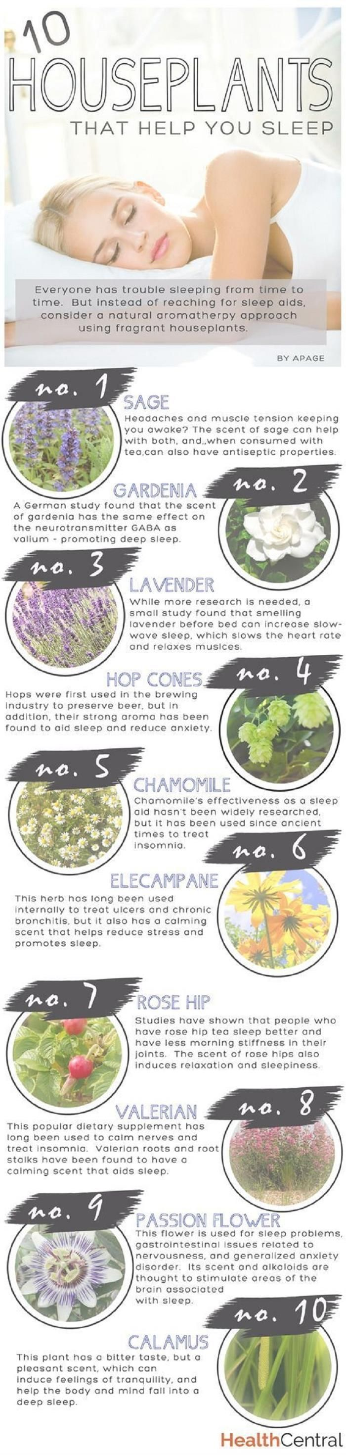 10 houseplants that help you sleep.