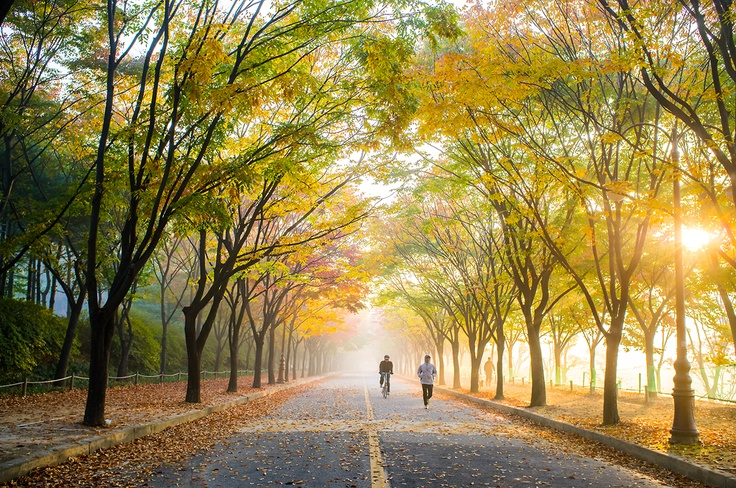 Fall in Incheon Park, Incheon, Korea