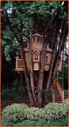 treehouse wedged between branches