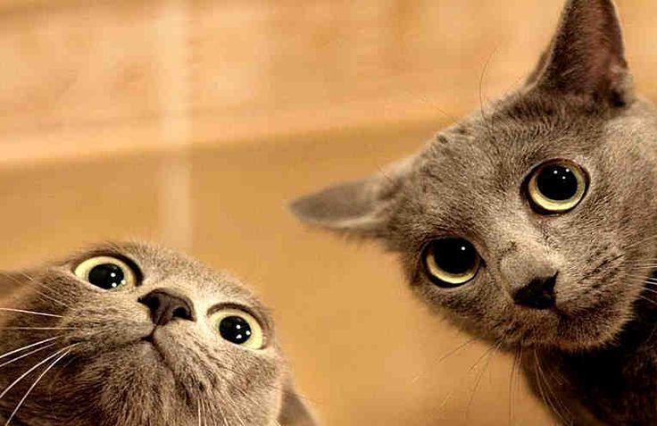 Gatos Chistosos #video