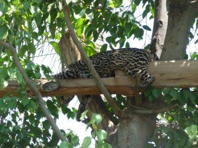 México, zoológico de Aragon