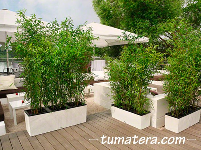 Encuentralas en: http://www.tumatera.co/products/matera-inteligente-09-mi-1003234cottage/