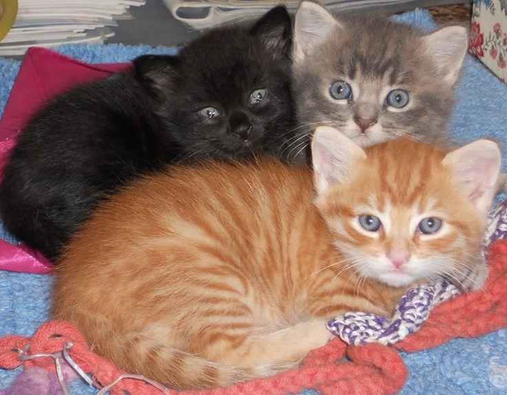 My lovely new born kittens 40 days old !!