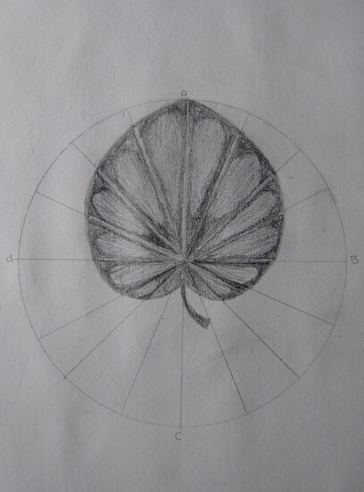 Age 12 ~ Geometric Drawing ~ Water Lily Leaf ~ main lesson book
