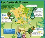 Les forêts de France - Le Petit Quotidien, le seul site d'information quotidienne pour les 6-10 ans !