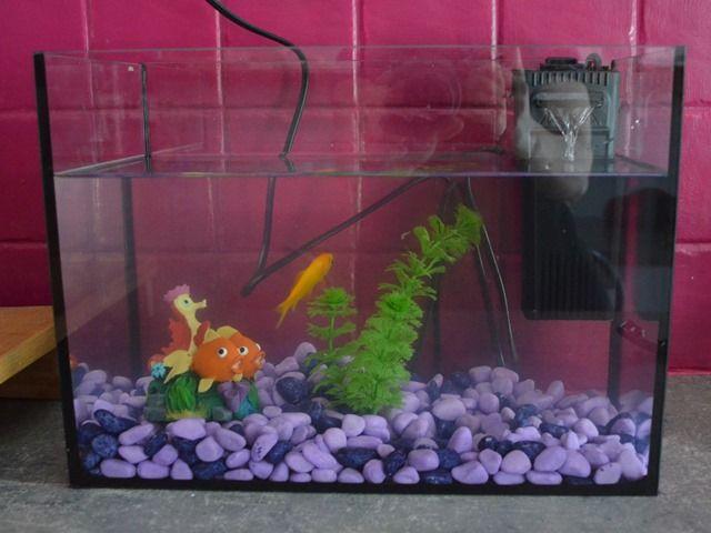Ddm levage en classe marcel le poisson rouge for Aquarium poisson rouge eau
