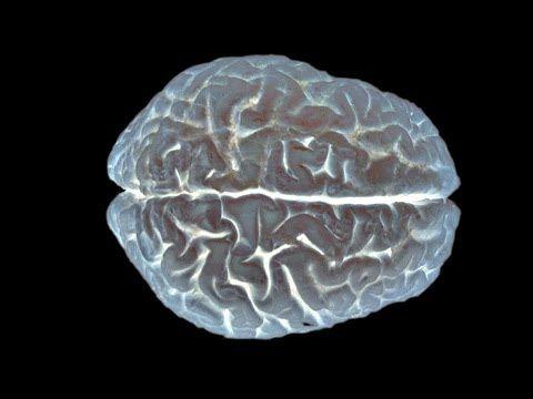 The Neuroscience of Memory | Inside the Brain #alzheimers #tgen www.mindcrowd.org
