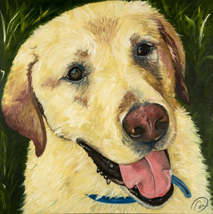 Swisher, the yellow lab, oil on canvas. Prints are available to order at any size. View more pet portraits at www.camtheartist.com