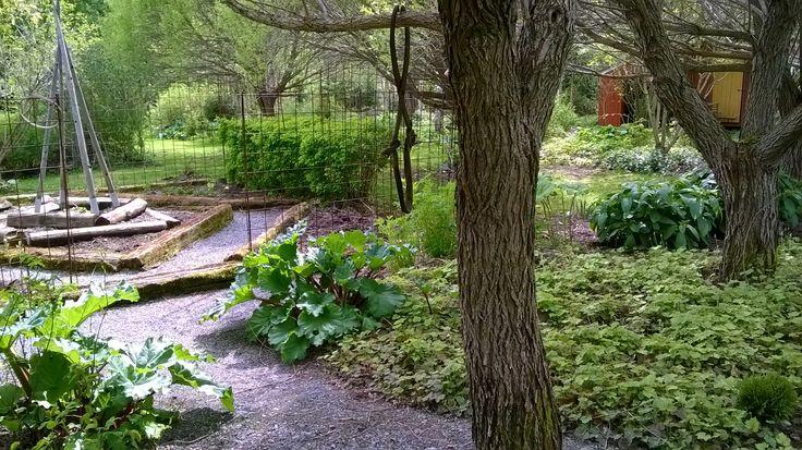 Toukokuuta - kaikki on kasvussa.  The garden in May - everything is growing ...