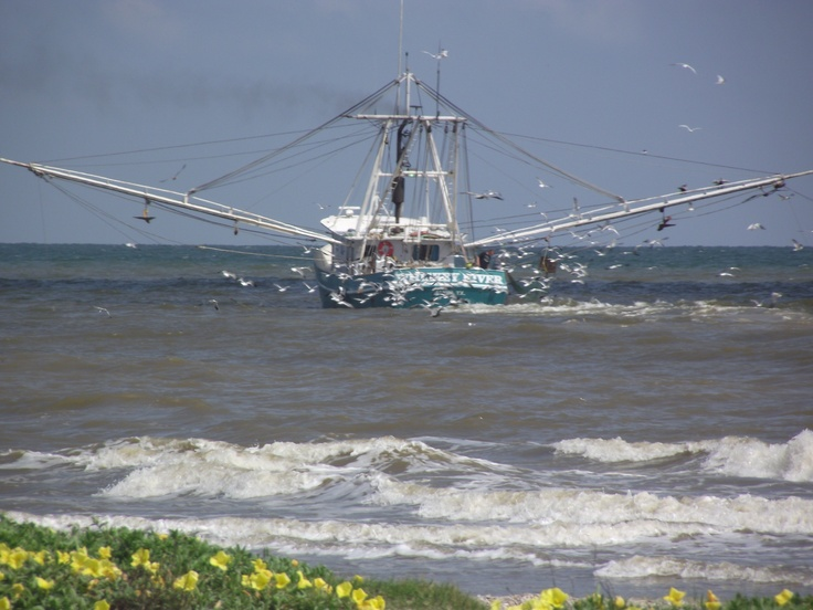 Shrimp Boat and Dune Flowers at Crystal Beach, TX: Fishing Boats, Shrimp Boats, Dune Flowers