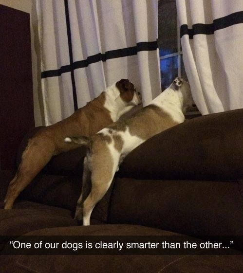 """One of our dogs is clearly smarter than the other"" - hilarious!"