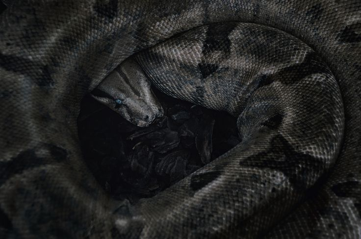 Snake by TasosKDs on 500px