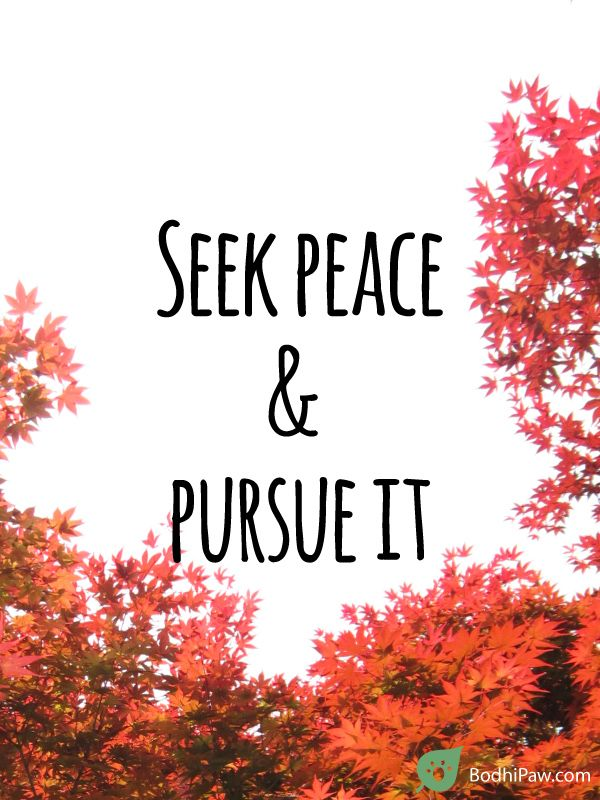 Seek Peace and Pursue It - Inspirational Quote - Bodhi Paw